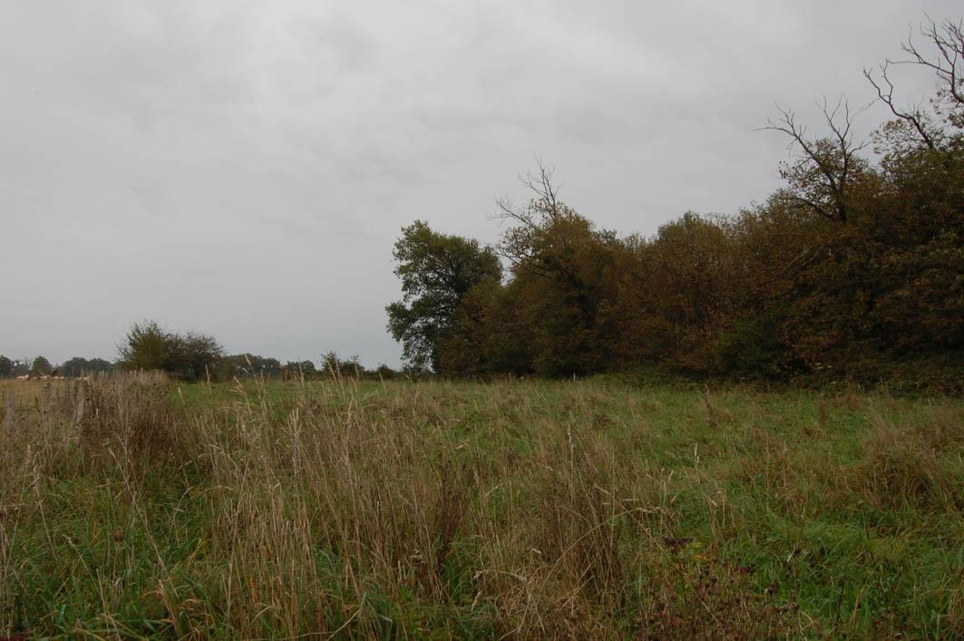 10-10-2014-bois-de-hetres-04