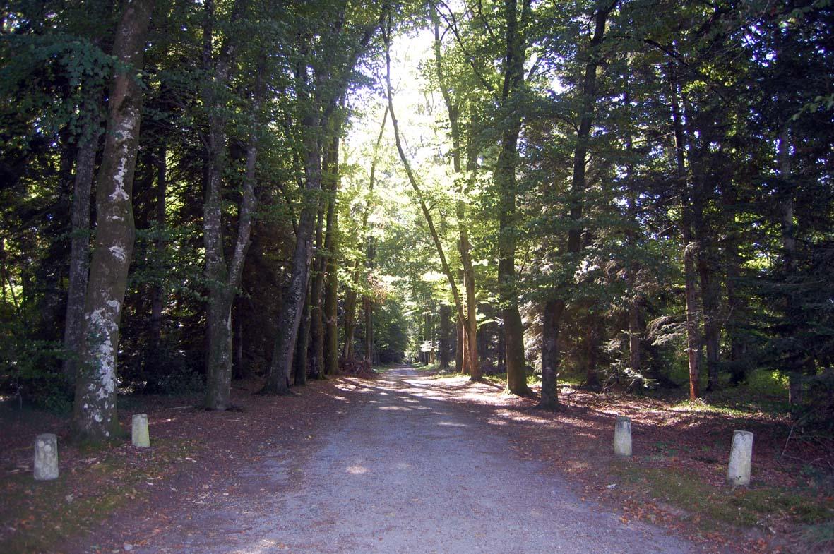 chemin-essarts-26-09-2014-01