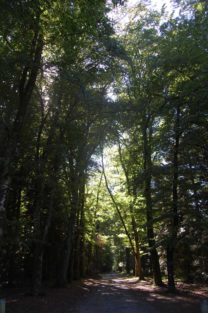 chemin-essarts-26-09-2014-02