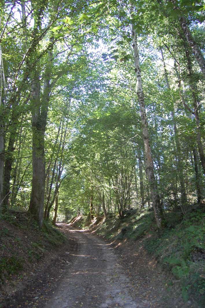 sentier-bois-aux-fees-chemin-01